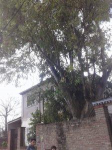 El árbol que amenaza al merendero.